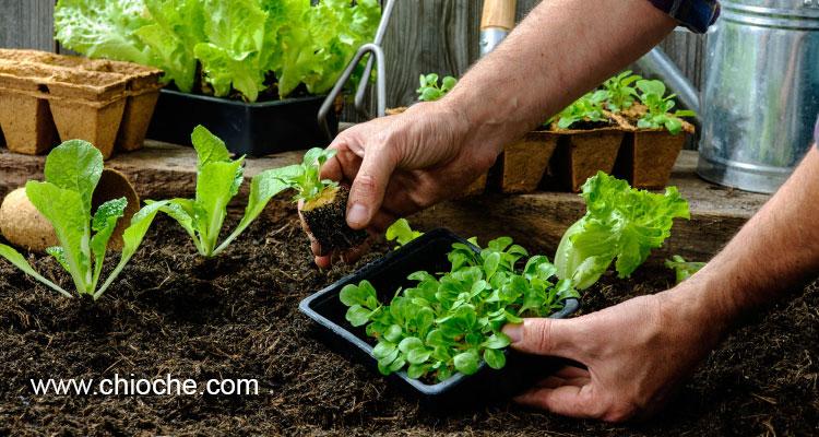 تقویم کاشت سبزیجات خانگی